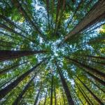 Obraz przedstawia las
